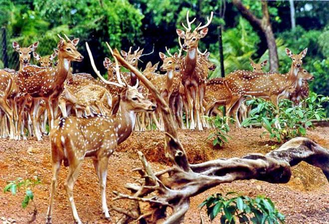 തൃപ്പൂണിത്തുറ ഹില്പാലസില് മാനുകള് കൂട്ടത്തോടെ ചത്തൊടുങ്ങുന്നു